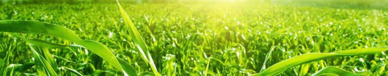 Success stories of Mycorrhiza and aurea systems.